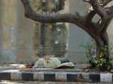Pondicherry28