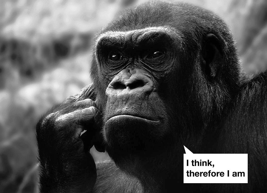 cropped-Slider-Gorilla2.jpg